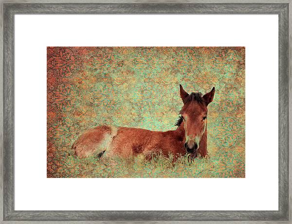 Flowery Foal Framed Print