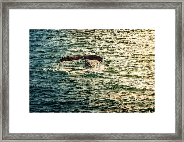 Fluke Wave Framed Print
