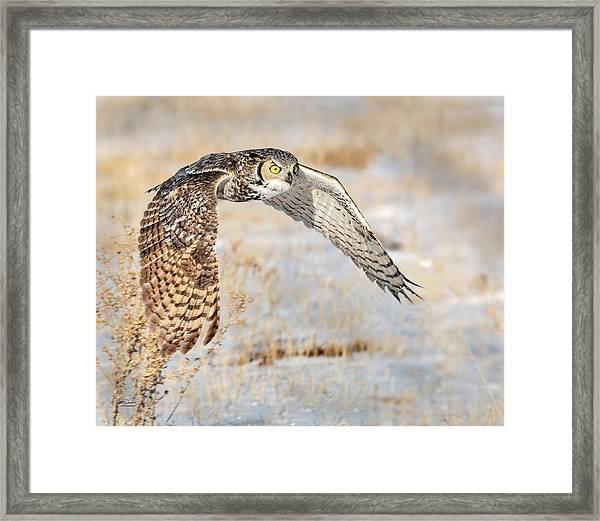 Flying Great Horned Owl Framed Print