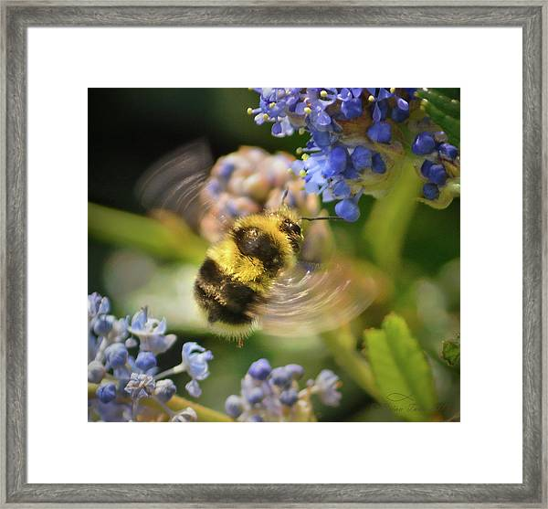 Flying Miracle Framed Print