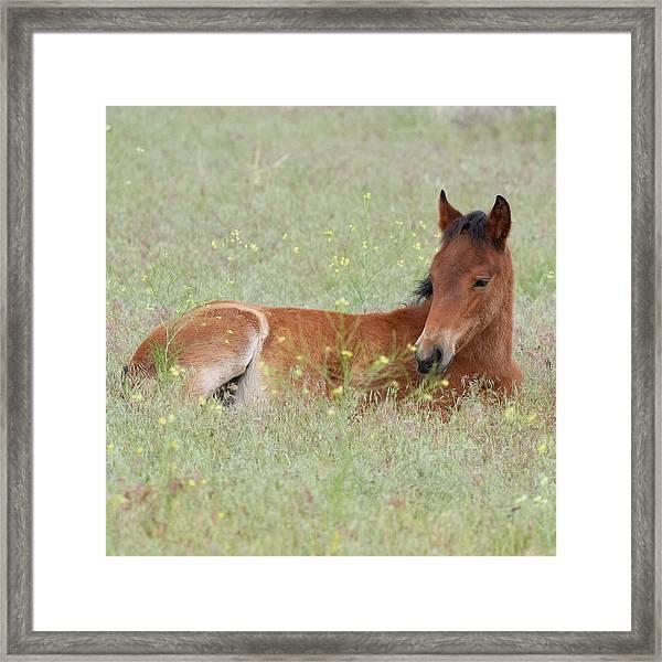 Foal In The Flowers Framed Print