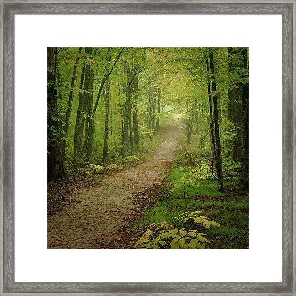 Foggy Path Framed Print