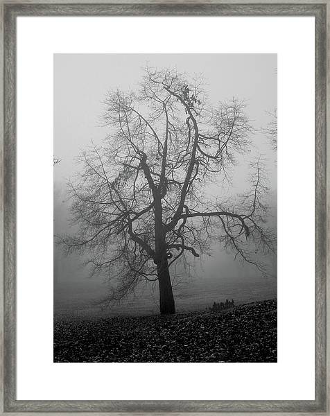 Framed Print featuring the photograph Foggy Tree In Black And White by William Selander