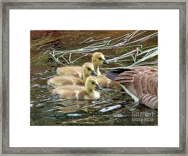 Following Mom's Lead Framed Print