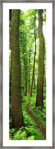Footpath Between The Trees Framed Print