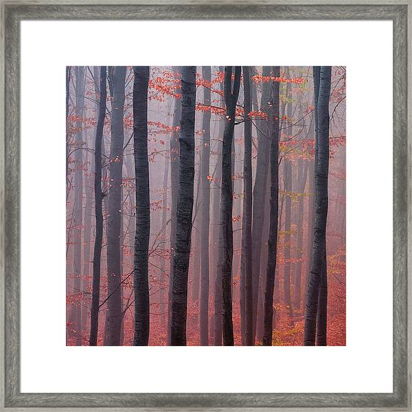 Forest Barcode Framed Print