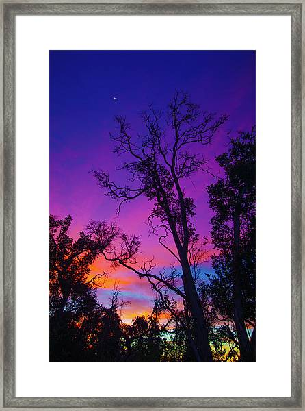 Forest Colors Framed Print