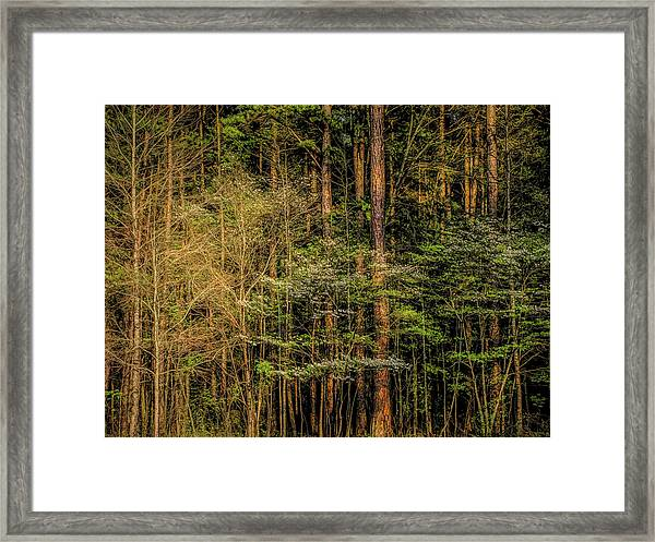 Forest Dogwood Framed Print