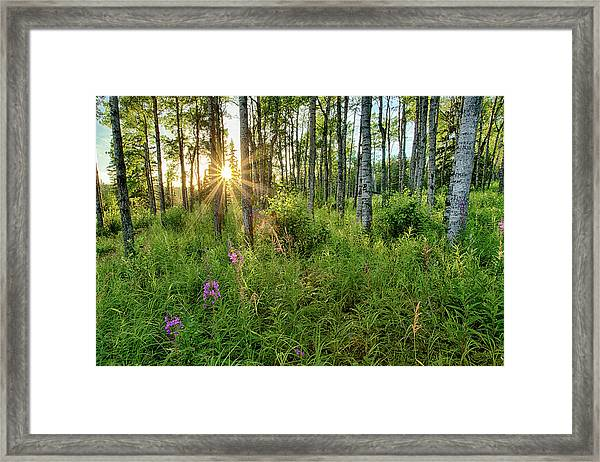 Forest Growth Alaska Framed Print