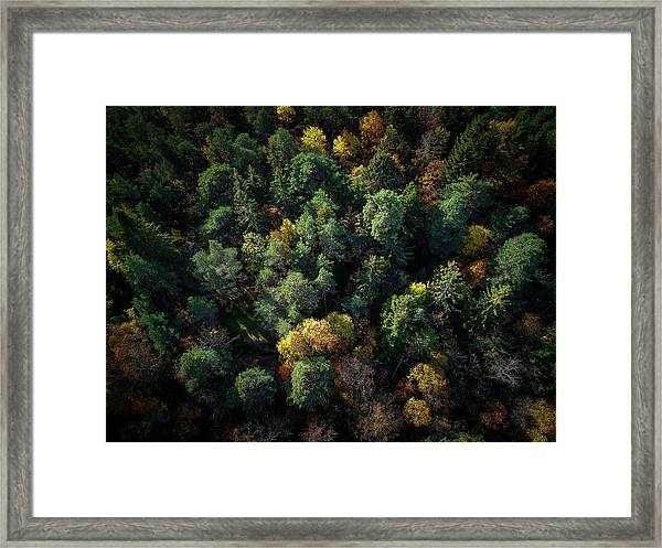Forest Landscape - Aerial Photography Framed Print