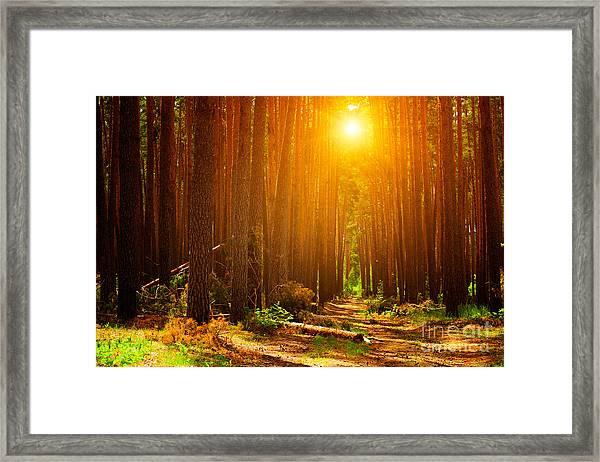 Forest Landscape Framed Print