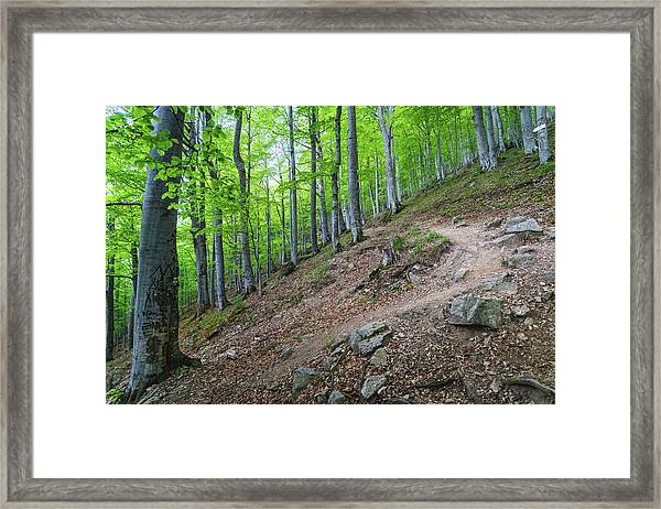 Framed Print featuring the photograph Forest On Balkan Mountain, Bulgaria by Milan Ljubisavljevic
