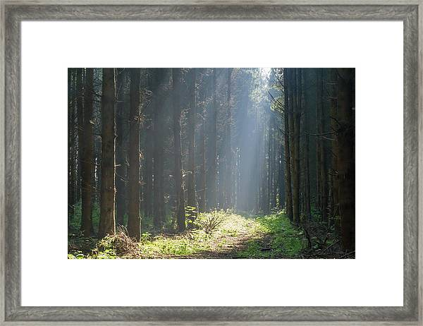 Framed Print featuring the photograph Forrest And Sun by Anjo Ten Kate