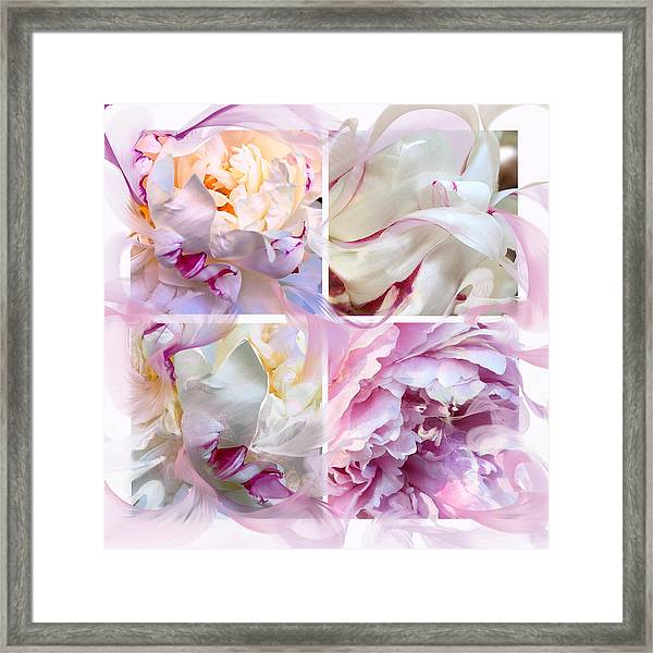Four Peonies  Framed Print