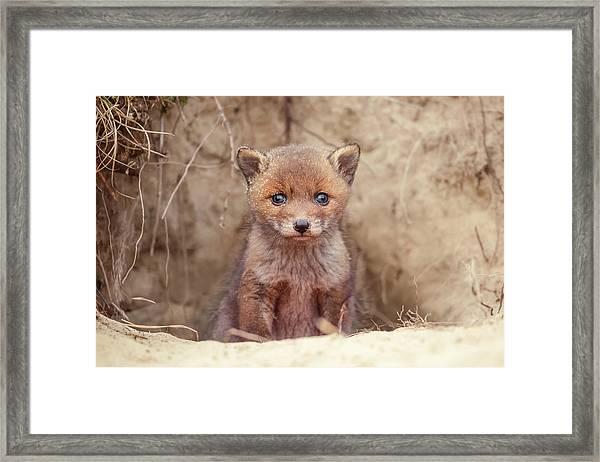 Fox Kit Series - Newborn Fox Baby Framed Print