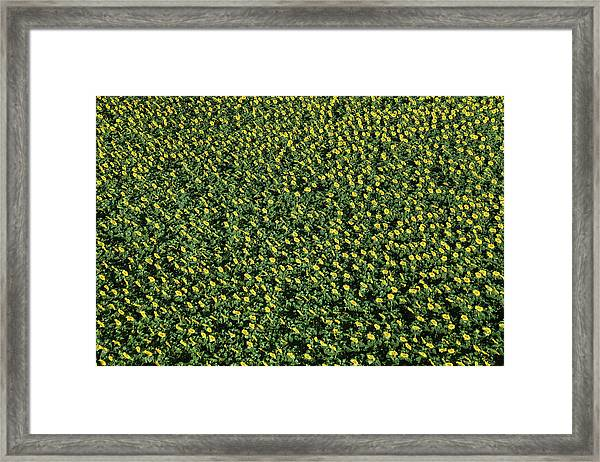 France, Allier, Vicq, Blooming Fields Framed Print by Cormon Francis / Hemis.fr