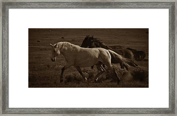 Framed Print featuring the photograph Freedom II by Catherine Sobredo
