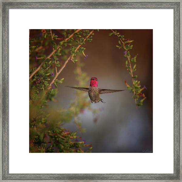 Freeze Frame Framed Print