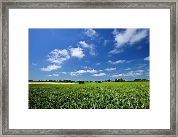 Fresh Air. Blue Skies Over Green Wheat Framed Print