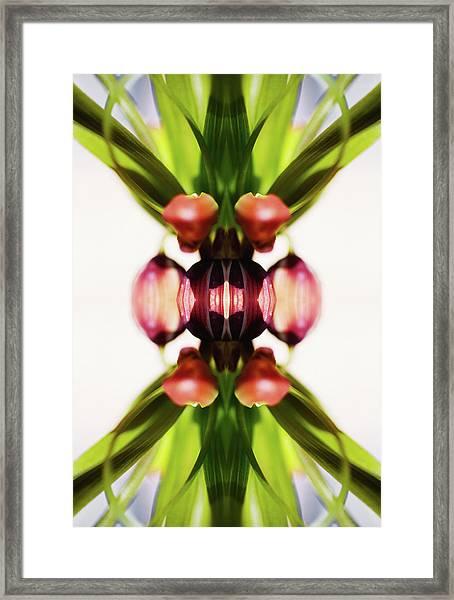 Fritillaria Flower Framed Print