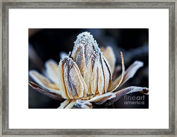 Frozen Flower Bud, Macro Shot Framed Print