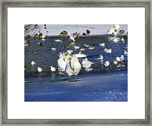 Frozen Lake. Framed Print