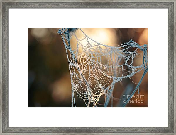 Frozen October Morning Cobwebs Framed Print