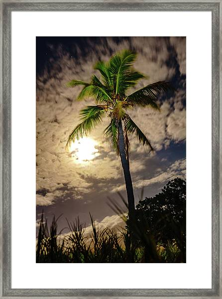 Full Moon Palm Framed Print