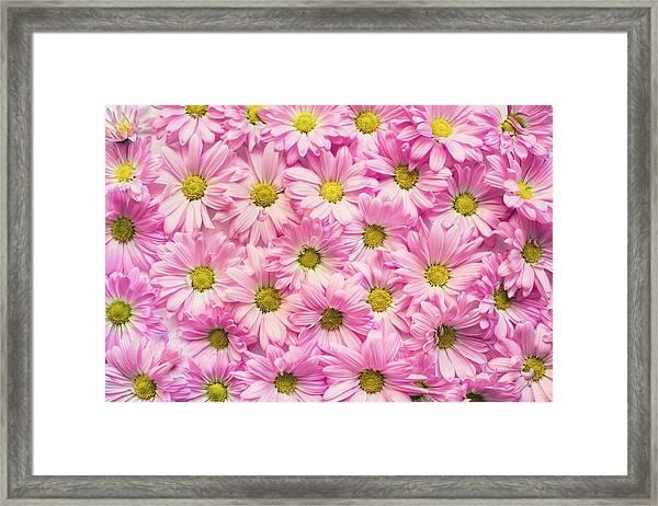 Full Of Pink Flowers Framed Print