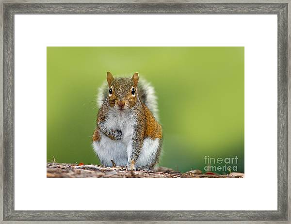 Funny Image From Wild Nature. Gray Framed Print