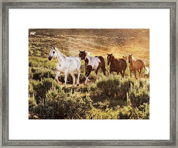 Galloping Down The Mountain Framed Print