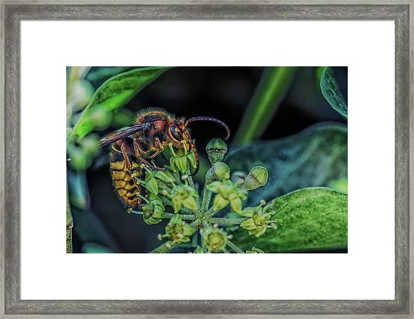 Garden Life Part Three Framed Print