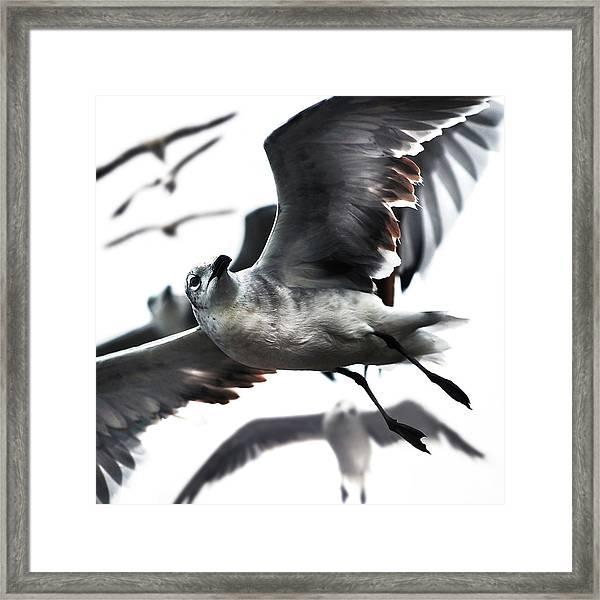 Gazing Direction Flying Framed Print