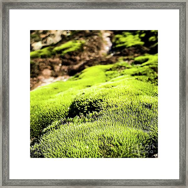 Framed Print featuring the photograph Tiny Forest 1 by Atousa Raissyan