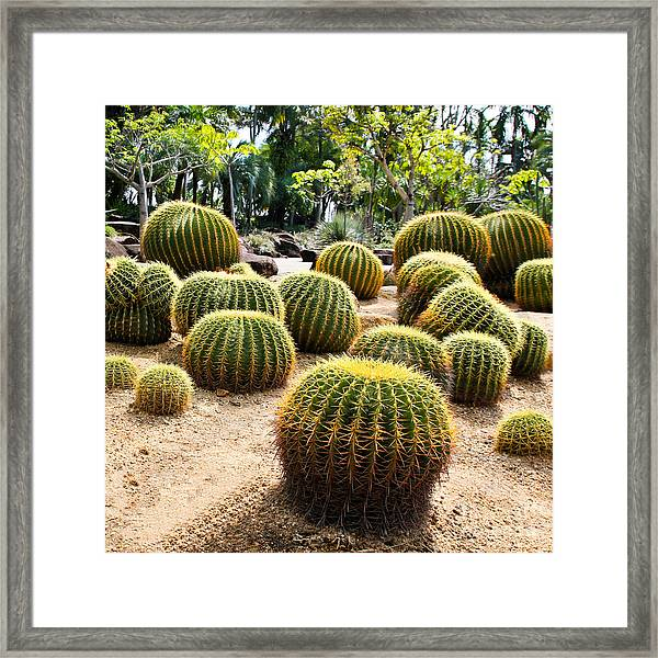 Giant Cactus In Garden, Thailand Framed Print