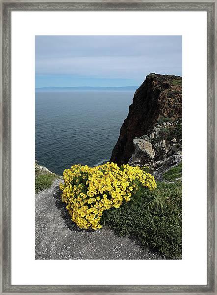 Giant Coreopsis Framed Print by Robin Street-Morris