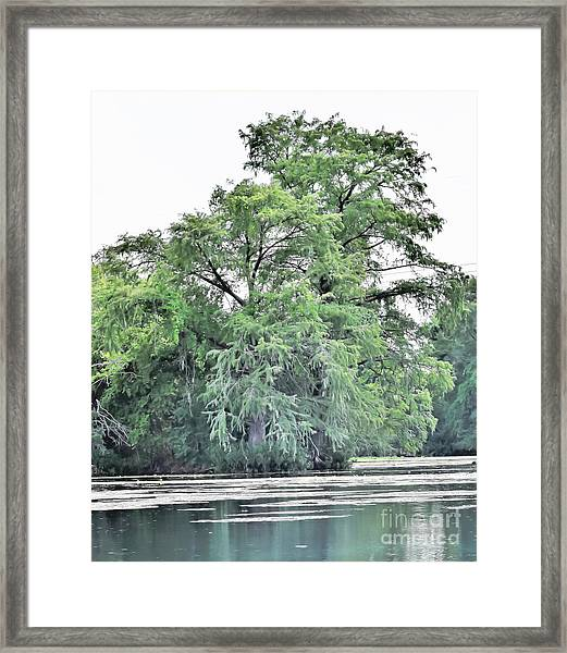 Giant River Tree Framed Print
