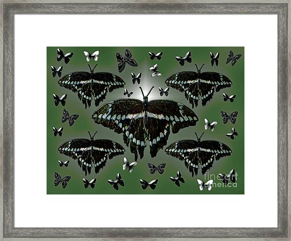 Giant Swallowtail Butterflies Framed Print