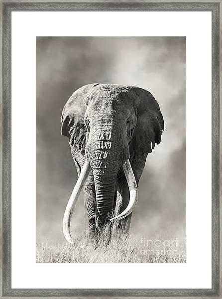 Giant Tusked Bull Elephant In Amboseli, Kenya Framed Print