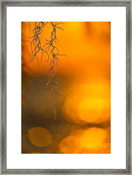 Gilded Moss Framed Print
