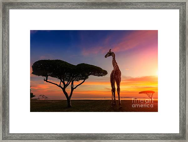 Giraffes In The Savannah At Sunset Framed Print