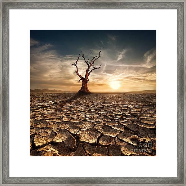 Global Warming Concept. Lonely Dead Framed Print