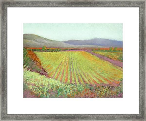 Gloria Ferrer Winery Framed Print