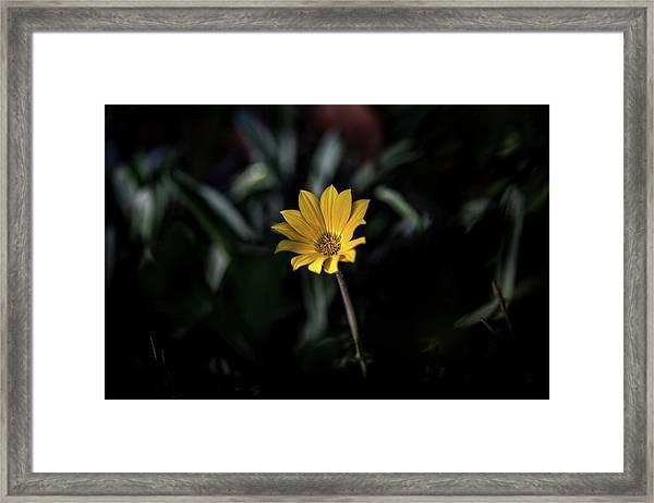 Glowing Brightly Framed Print