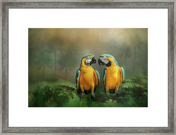 Framed Print featuring the photograph Gold And Blue Macaw Pair by Patti Deters