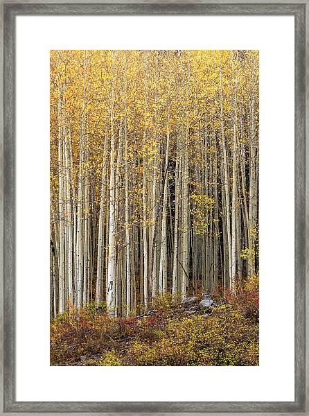 Gold Dust Framed Print