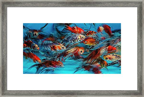 Gold Fish Abstract Framed Print
