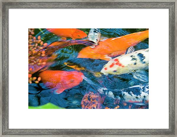 Gold Fish Framed Print by By Ken Ilio