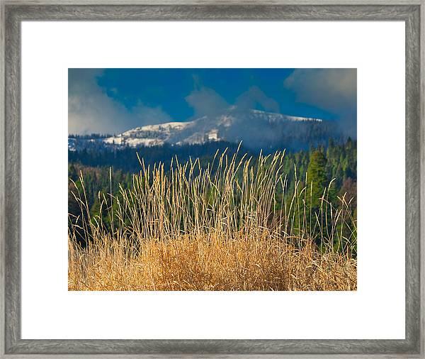 Gold Grass Snowy Peak Framed Print