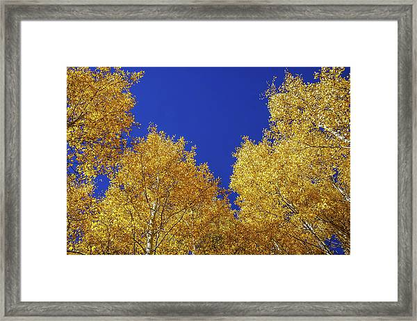 Framed Print featuring the photograph Golden Aspens And Blue Skies by Dawn Richards